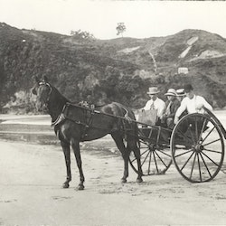 Horse and trap with Waihi Beach Mine in background, c1900.